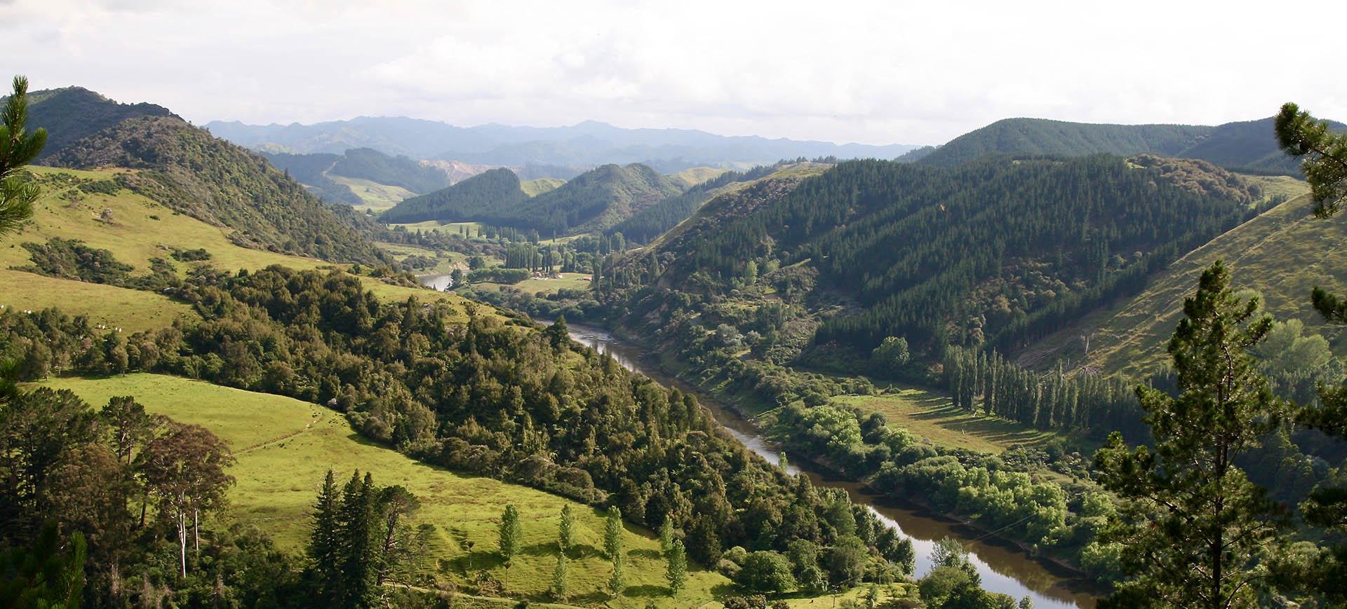 NZ Whangaui