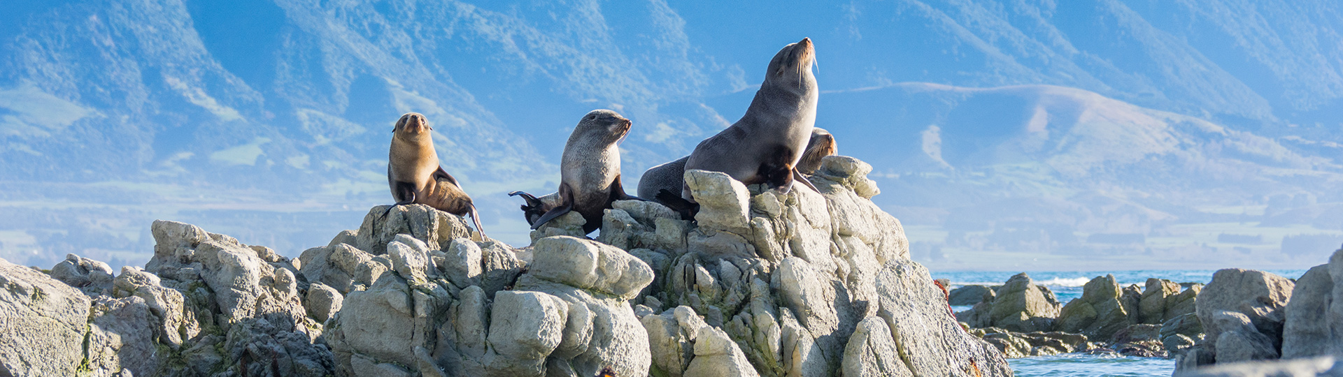 Zeehonden-Nieuw Zeeland