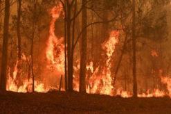 Australië Bosbrand